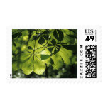 Green Seven Point Leaves with Sun Illumination Postage