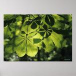 Green Seven Point Leaves with Sun Illumination Print