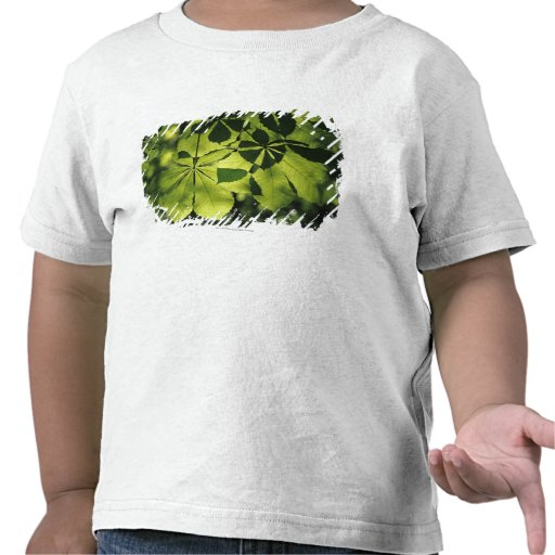 Green Seven Point Leaves with Sun Illumination Shirts