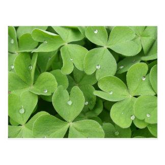 Green shamrock clover leaves postcard
