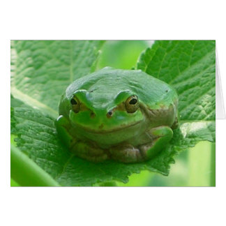 Green smiling Frog - close up Card
