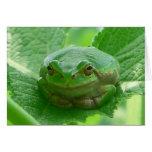 Green smiling Frog - close up Greeting Card
