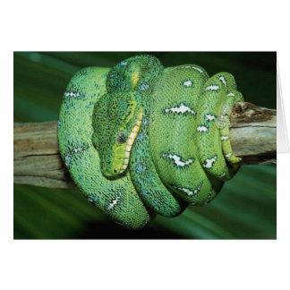 Green Snake Card