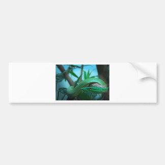 Green Snake Eye Bumper Sticker