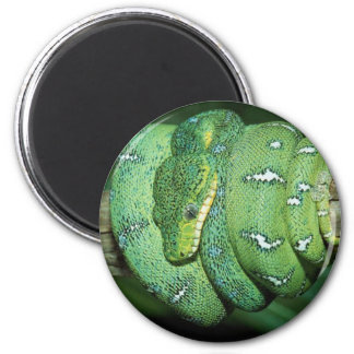 Green Snake Refrigerator Magnets