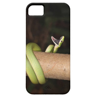Green snake with mouth open iPhone 5 covers