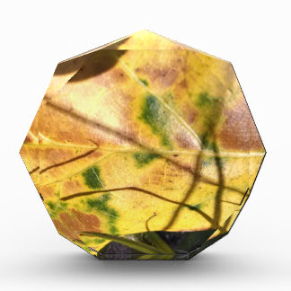 Green speckled yellow leaf in grass awards