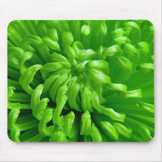 Green Spider Mums Mouse Pad