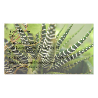 Green Spiky little striped cactus Double-Sided Standard Business Cards (Pack Of 100)
