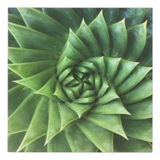 Green Spiral Aloe Polyphylla Geometric Succulent Faux Canvas Print