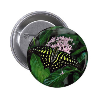 Green-spotted triangle butterfly, Malaysia  flower Buttons
