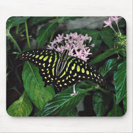 Green-spotted triangle butterfly, Malaysia  flower Mousepad