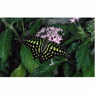 Green-spotted triangle butterfly, Malaysia Acrylic Cut Outs