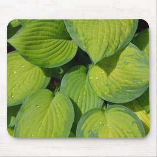 Green spring hosta plant leaves mouse pads