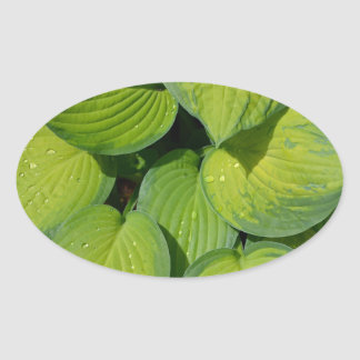 Green spring hosta plant leaves oval sticker