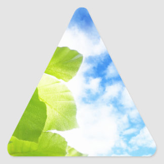 Green spring leaves and blue sky triangle sticker