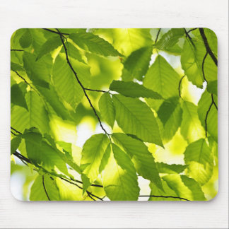 Green spring leaves mouse pad