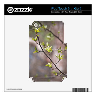 Green Spring Leaves on Gray Brown iPod Touch 4G Skins