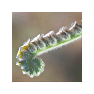 green spring time curly flower canvas print