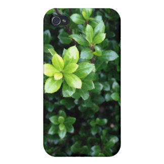 Green Sprout iPhone 4/4S Cover
