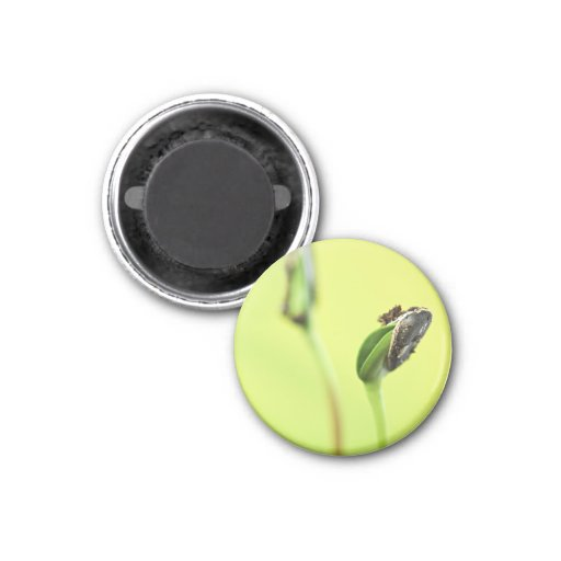 Green sprouts fridge magnets