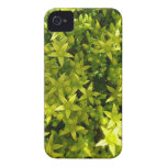 green star like flowers herbal plant iPhone 4 Case-Mate cases