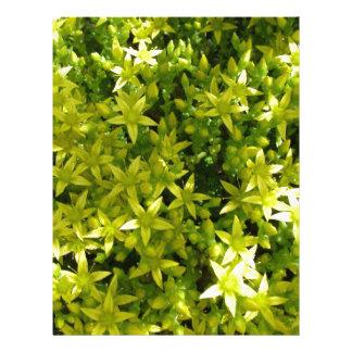 green star like flowers herbal plant letterhead