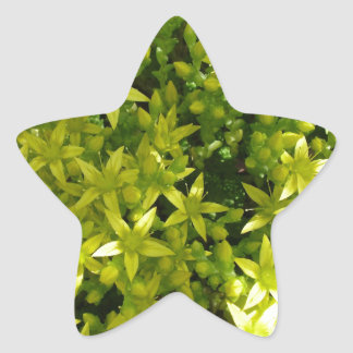 green star like flowers herbal plant star stickers