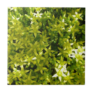 green star like flowers herbal plant small square tile