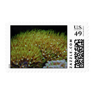 green star polpy  coral stamp