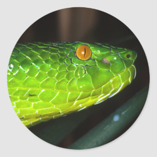 Green Stejneger's pit viper snake Classic Round Sticker