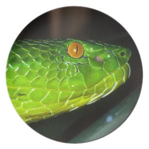 1369e19006 Chinese Green Tree Viper Home Furnishings   Pet Supplies