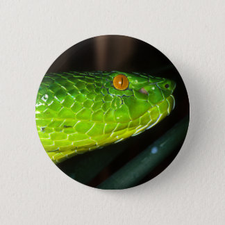 Green Stejneger's pit viper snake Pinback Button