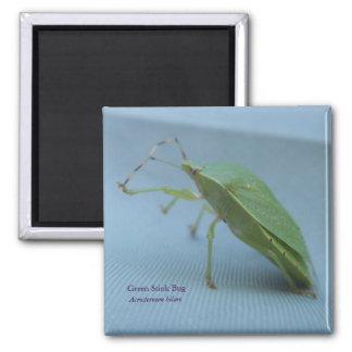 Green Stink Bug Magnet