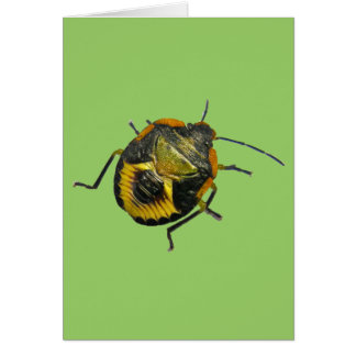 Green Stink Bug Nymph Coordinating Items Card