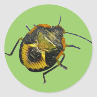 Green Stink Bug Nymph Coordinating Items Classic Round Sticker