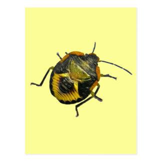 Green Stink Bug Nymph Coordinating Items Postcard