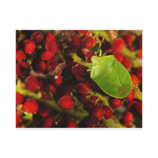 Green Stink Bug on Sumac Canvas Print