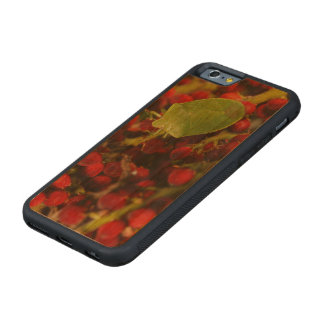 Green Stink Bug on Sumac Carved® Cherry iPhone 6 Bumper