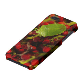 Green Stink Bug on Sumac Cover For iPhone 5