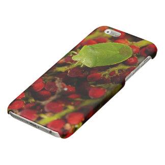 Green Stink Bug on Sumac Glossy iPhone 6 Case