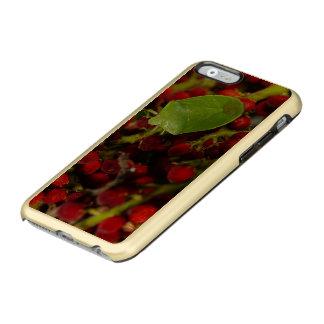 Green Stink Bug on Sumac Incipio Feather® Shine iPhone 6 Case