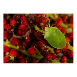 Green Stink Bug on Sumac Large Business Card