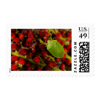 Green Stink Bug on Sumac Postage