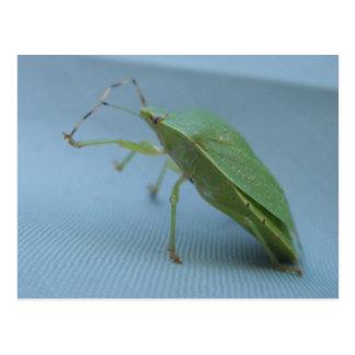 Green Stink Bug Postcard