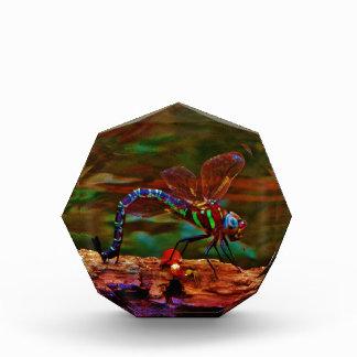 Green striped Teal & purple Dragonfly Acrylic Award