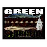 Green Sturgeon-Collage-Postcard