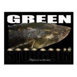 Green Sturgeon-Head-Postcard