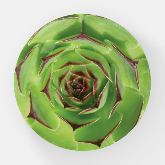 Green Succulent Cactus Spring Flower Wedding Paperweight