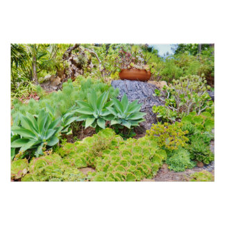 GREEN SUCCULENT GARDEN AND POTTED PLANT POSTER